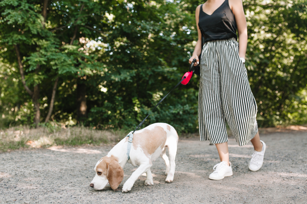 milf walking dog in Neighbourhoods